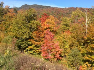 Leaf-peeping--check!
